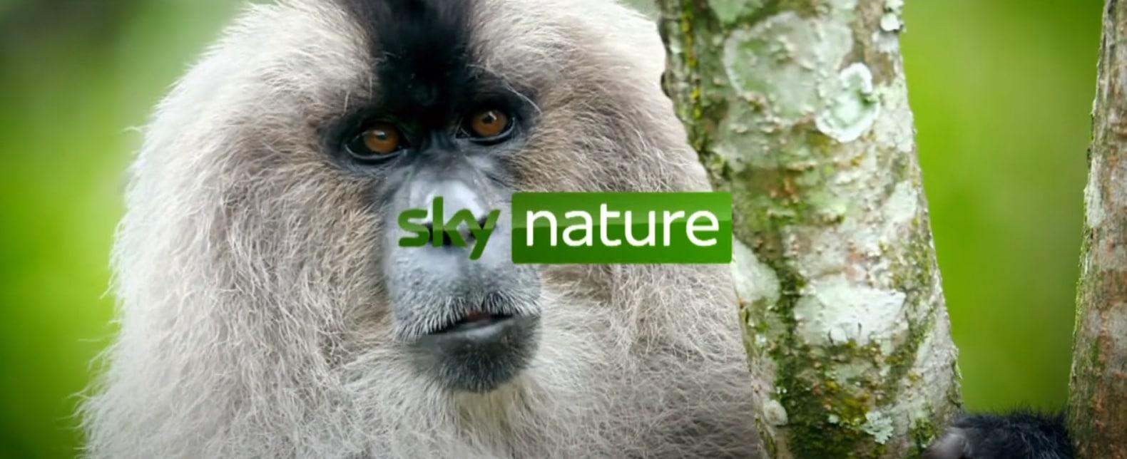 sky-nature-sender